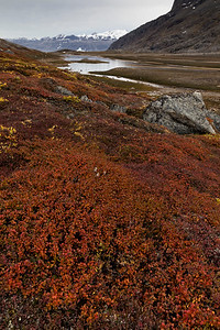 There are no tall trees this far north, but multiple plant species are under foot with dramatic colors
