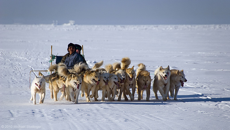 Sled dog team and musher shortly before arriving at the finish line of the sled dog race at Thule, Greenland.
