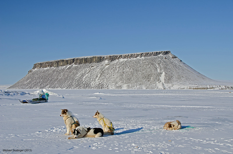 Sled dogs on the sea ice in North Star Bay, Thule, with Dundas Mountain in the background.