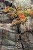 Cliff-side summer vegetation, Denmark Island, Scoresby Sund, Greenland