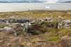 Historic Thule village site with rock and turf winter houses and low level entrances, Danmark Ø, Forfjord, Scoresby Sund, Greenland