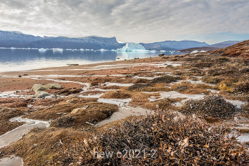 Cape Hofmann Halvo beach and icebergs, Harefjord, Scoresby Sund, Greenland