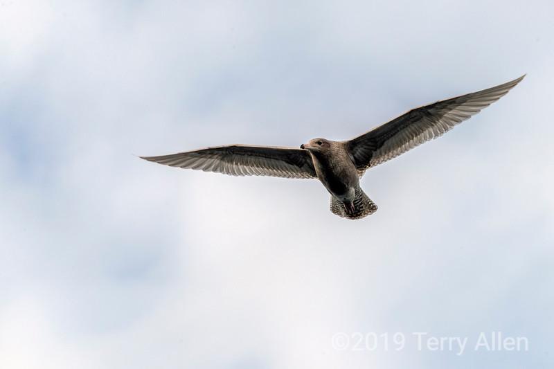 Bird in flight md