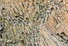 Columnar basalt with tinky dwarf birch and bearberry plants, Vikingebugt Inlet, Scoresby Sund, Greenland