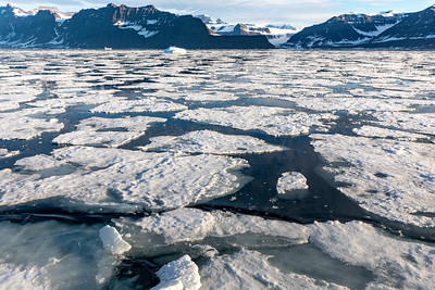 The drift ice is key to survival of the seals and bears.  Unfortunately its decreasing rapidly
