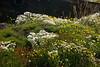 Qaqortoq Flowers