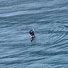 Sisimiut, Greenland, kayak rolling-43