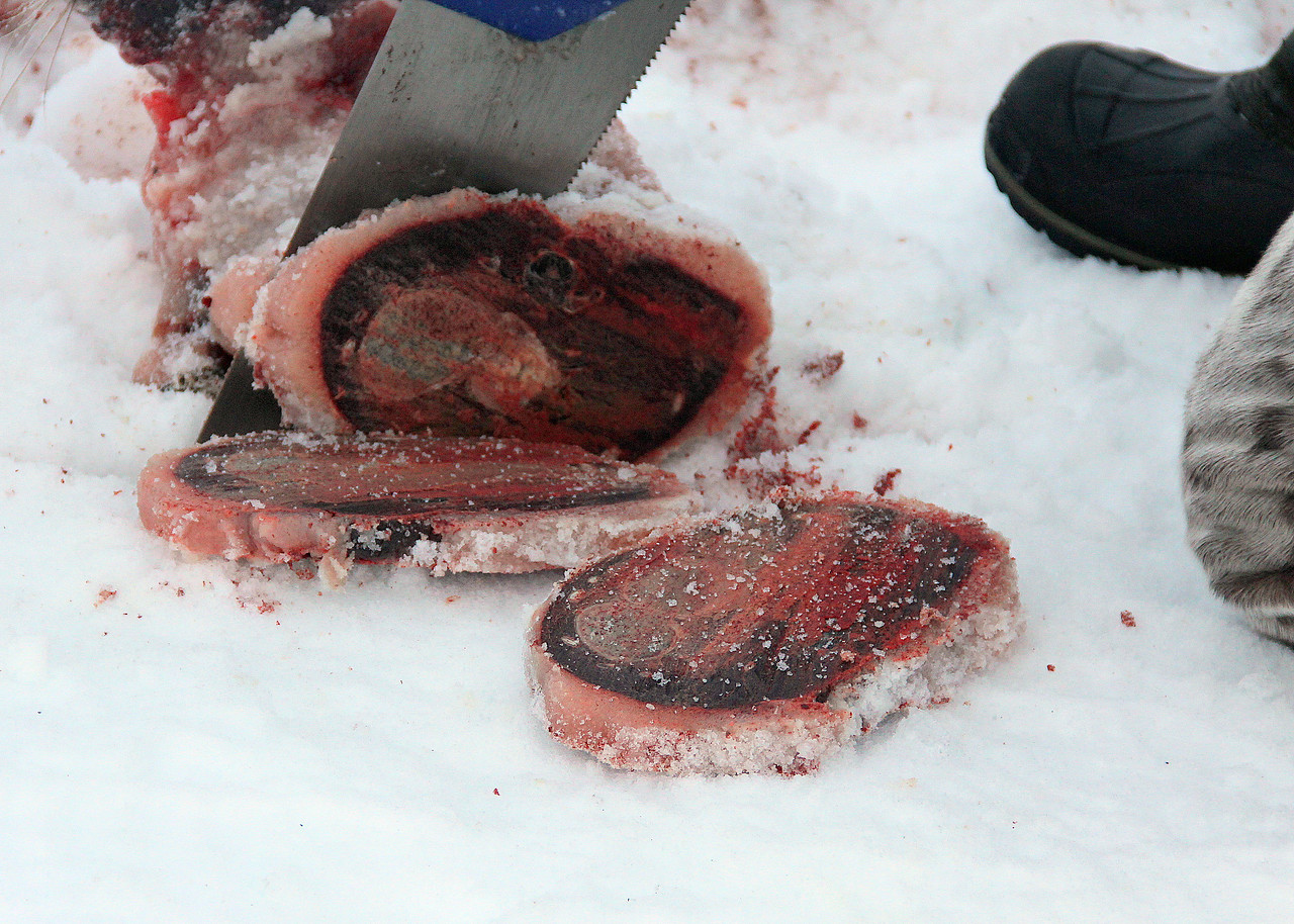 22 Frozen seal meat