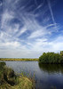 Everglades- (5)