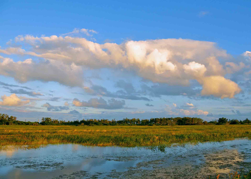 Everglades- (3)