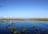 Everglades- (6)
