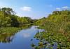 Everglades- (4)