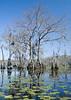 Everglades- (2)