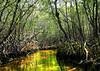 Everglades- (10)
