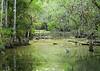 Everglades- (9)