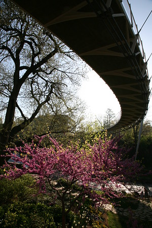 Liberty Bridge spring