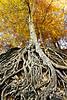 Gov School Tree color fresco copy