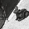 mice on main