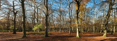 Nov' 25th 2016.  Bostall woods