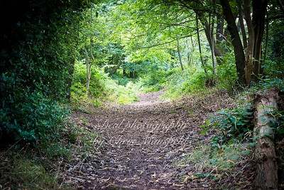 July 16th 2016. Lessness abbey woods