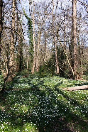 march 25th 2017 Lesnes abbey wood 03