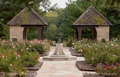 015-garden_rose-dsm-22sep08-3394