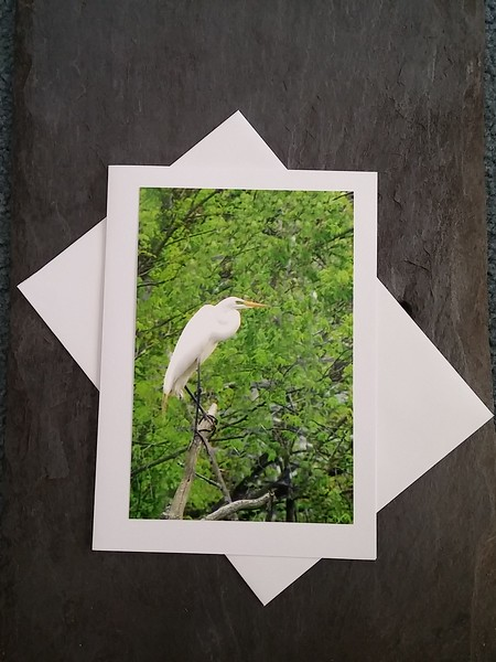A18 Great Egret