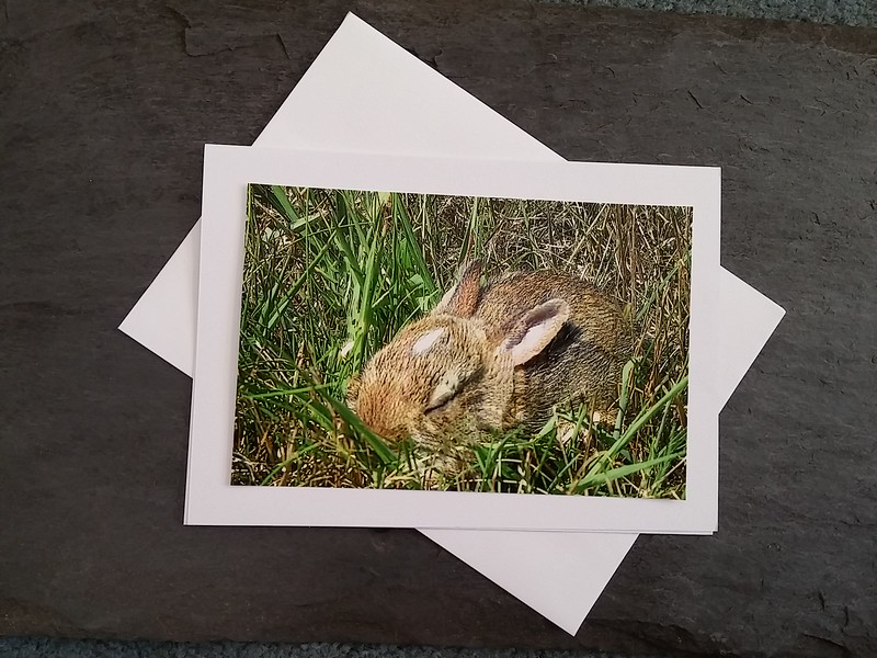 A03 Backyard Bunny