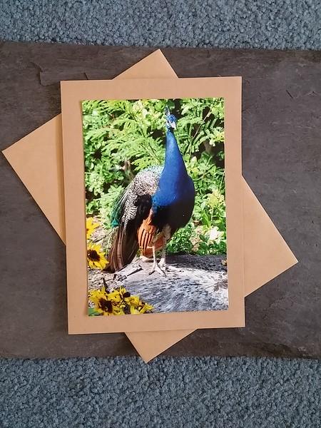 A06 Peacock