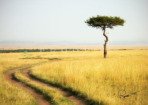 Africa Series