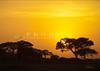 3065_African Sunset.jpg