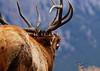 0435_Elk