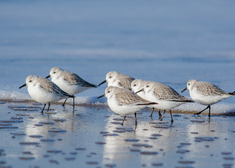 Birds 781