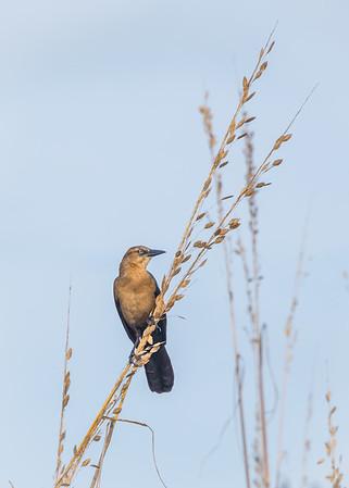 Bird 4700
