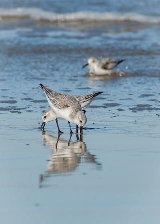 Birds 4014