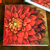 Panoramic Blank Greeting Card - Front View