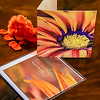 Panoramic Blank Greeting Card -Folded Front & Back View