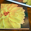 Panoramic Blank Greeting Card - Folded Front View