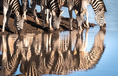"""""""Zebras At The Watering Hole""""  (#AN121)"""