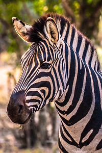 The Striped Smile