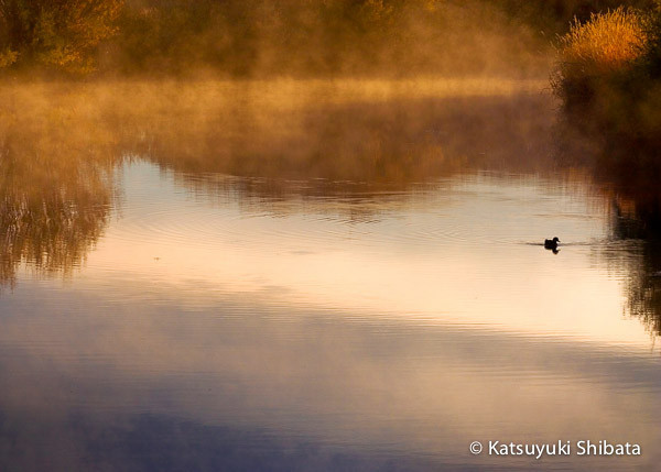 GC-045: Morning Mist #2
