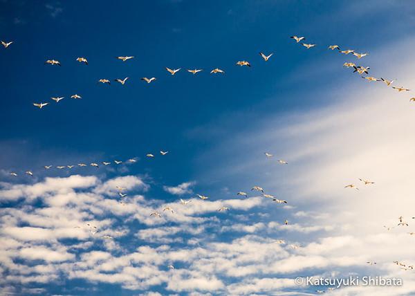 GC-063: Wings