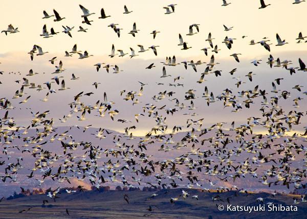 GC-047: Lower Klamath National Wildlife Refuge