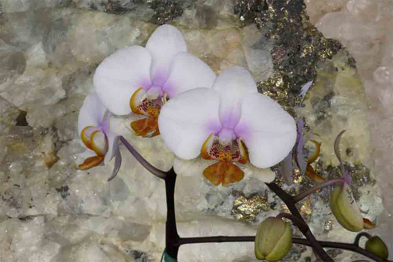 Orchids & Rock with Fools' Gold