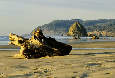 """Cannon Beach Driftwood""  (#OR304)"