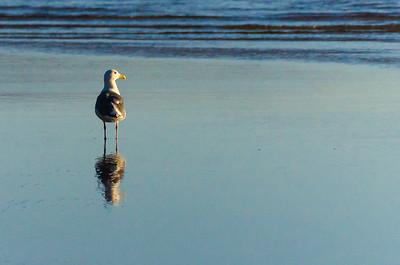 """""""Pensive Gull""""  (#AN112)"""