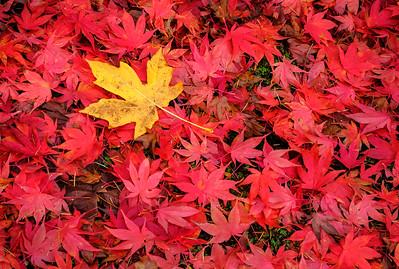 """Autumn Leaf""  (#OR302)"