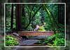 Muir-Woods-Bridge