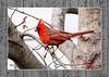 mr-cardinal