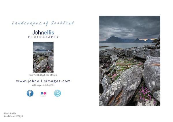 Sea Thrift, Elgol, Isle Of Skye